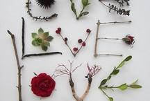 flower+plants