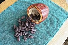 Cocoa Plant / by gardenlady