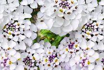 Tuin | Voorjaar