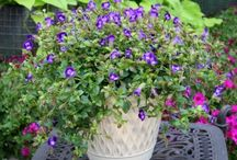 Patio Plantings / Inspiration to make your patio planters look better than ever / by Suntory Flowers