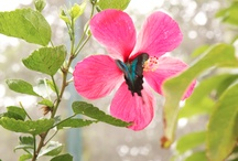 Nature (photos by The Happyholic) / drop by drop, gathering the addictive essence of nature's marvels