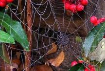 Spiders webs