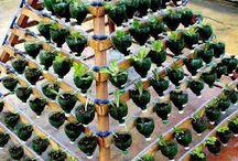 Small space vegtable garden