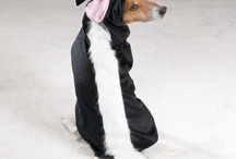 Costumes and Dress up  / by Official Canine Caviar Pet Food