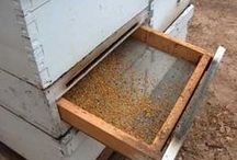 Farm ---- BEEs