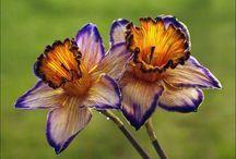 Garden beauties / by Margaret Vickers