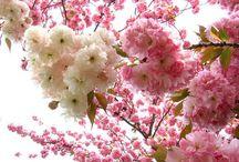Красиво очень цветы