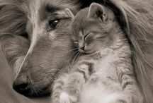 Kitty and dog