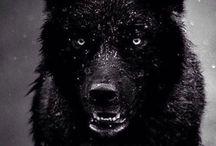 《Wolf》