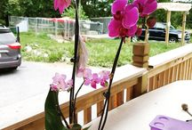 Customer Orchids