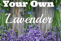 Lavender / I produce lavender and sell it. My goal is little Provence in Kvetoslavov, Slovakia
