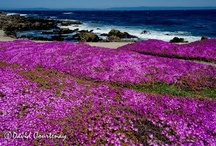 Monterey & Surrounds / by Sharon Coggin