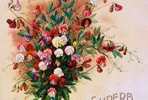 Printables,Vintage Floral Graphics,Chebbi,Provence,grunge,distressing / Текстура в стиле «гранж» с эффектом состаренности – это весьма модный элемент в сегодняшнем дизайне.