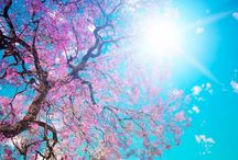 Spring Is In the Air / Beautiful, refreshing spring, alive with new life and possibilities