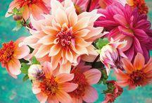 Cupsmith dahlias / Inspiration for Cupsmith gardening #cupsmithdays