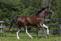 Horses ~ pets~ animals