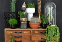 Potty ideas / Indoor house planting