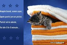Noapte buna