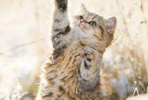 Lovely Cats / #cats #kitten #gatti #gatto #chat #gato #cute