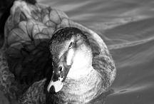 Animals / Fotos de naturaleza y animales
