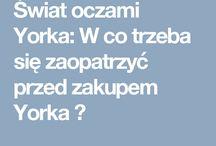 ♥ Zapraszam was na mojego bloga o Yorkach  ♥: http://swiatoczamiyorka.blogspot.com/