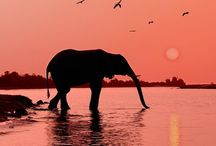 Elephants / by Tyler Munno