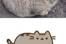 Fat and fuzzy friends
