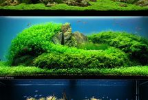 Akvarier og fisk / Akvarium