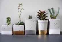 Home garden / Un jardin dans ma maison