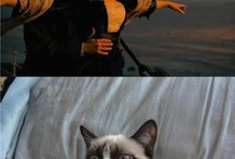Funny movie pictures / by Funny Animal Pictures