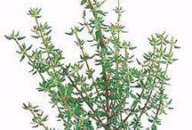 Gardening - Herb Garden Plants