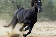 HORSE - LOVAK / https://www.facebook.com/Horses-Freedom-1582258222037777/timeline/