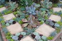 stepping stones with plants
