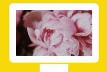 Phone & Desktop  Backgrounds