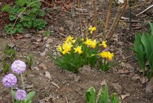 zahrada 2 / kytky a dřeviny