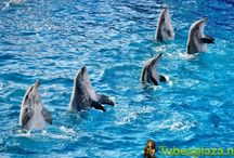 dolfijnenplaatjes