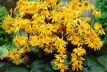 Yellow Perennials for Shade / Discover new perennials by color and light requirements to make creating your garden simpler.
