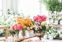 Beautiful Blooms / flowers