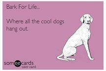 Bark for Life
