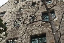 Magnolia of Ewha / by Ryan Chae