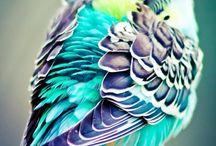 Fin Fågel