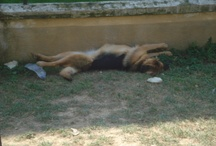 My beautiful friends / My special dogs Gorgo&Zola !