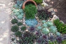 steingarten/succulenten