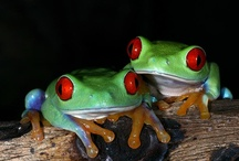 Frogs / by Angie Stulken Bell