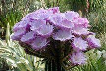 Kaktusblomster