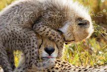 Cute Families