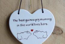 guinea pig stuff
