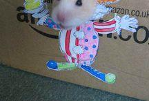 Awww Cutie!