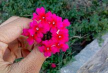 Florzinhas / Essa Pasta foi feita para Inspiração de fotos de flores