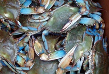 Louisiana Blue Crabs!